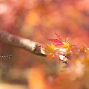 龍泉寺の紅葉(11月24日)その3