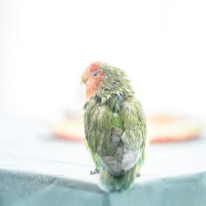 久々の水浴びお写真 その2