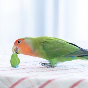 こーどの鳥さん2