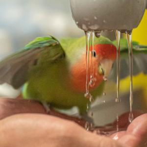 シャワータイム その1