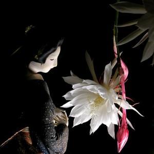 一夜限りの花「月下美人」web個展