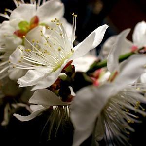 夜な夜な、花見