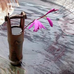 季節の花を生ける ~紫蘭~