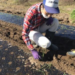 地域貢献型農福連携請負作業