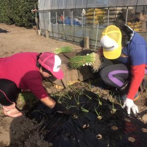 地域貢献型農福連携請負作業等
