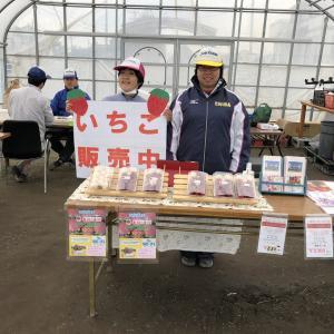 イチゴ「真紅の美鈴」収穫作業・販売など