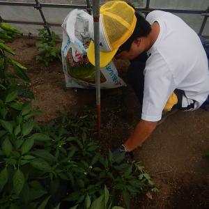 地域貢献型農福連携請負作業  地福連携請負作業