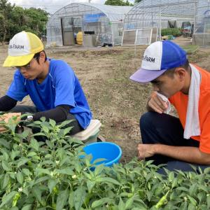 地域貢献型農福連携請負作業    地福連携請負作業 など