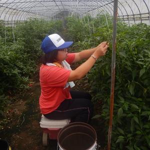 地域貢献型農福連携請負作業など