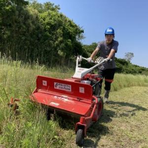 地域貢献型地福・農福連携請負作業、イチゴのポット受けなど