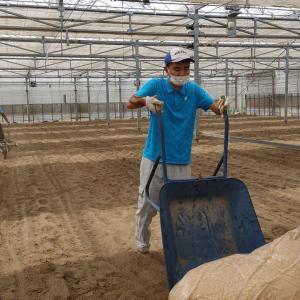 地域貢献型農福・地福連携請負作業など