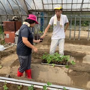 地域貢献型農福連携請負作業 イチゴ定植など