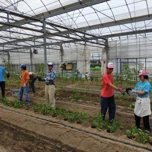 地域貢献型農福連携請負作業、お米の選別作業など