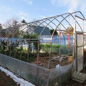 温室のビニールを撤去し、野菜も最終処分へ・・。