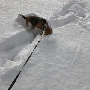こつぶ・・雪中探索?の巻。