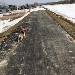 こつぶ・・散歩も楽し?