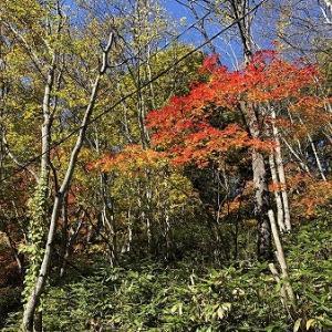 紅葉を見に行きました。