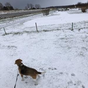 こつぶ・・初冬の散歩、河川敷編