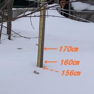 屋根雪の排雪、今シーズン2回目。