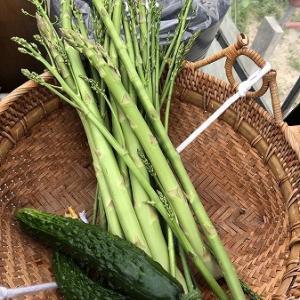 野菜作り・・初収穫と今の畑