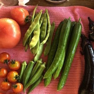 野菜作り・・出来損ないが多すぎる。