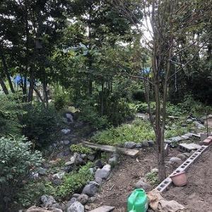 2021年8月の庭