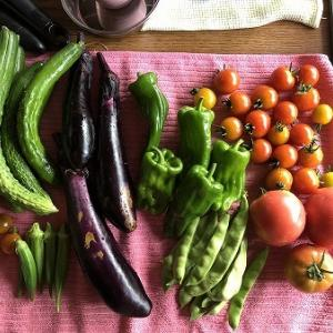 野菜作り・・そう、雨さえ降れば・・インゲンの巻。