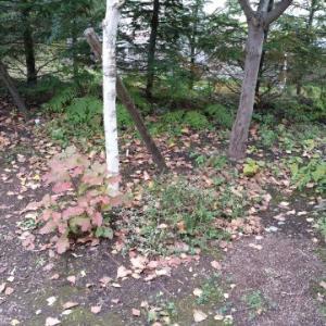 落ち葉の季節です