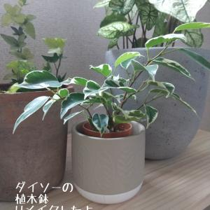 100円の植木鉢をかっこよくしよう!