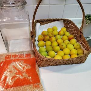 梅ジュースを作る