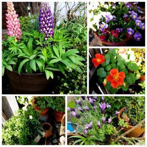 鉢植えの花を整理と家の中の観葉植物は?