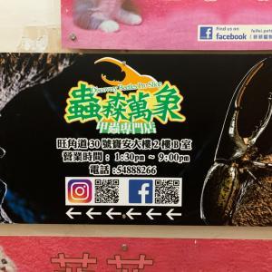 香港でクワガタ、カブトムシを買う!