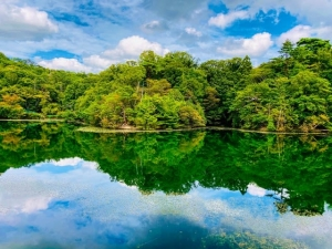 箕面・才ヶ原池の羽衣藻