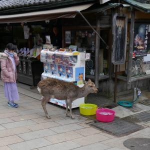 奈良公園の土産物屋さんは鹿に優しい