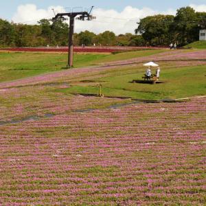 ひるがのピクニックガーデンで桃色吐息(ペチュニア) 畑を散策