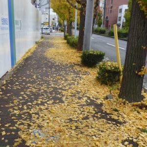 名古屋の街にも秋を感じるようになりました