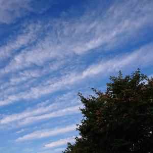 秋らしい雲になって来た。