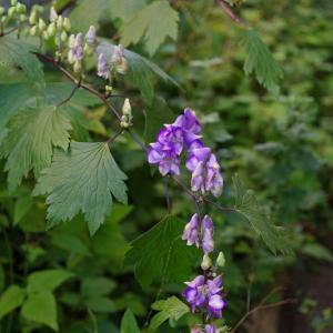 日陰に咲いた紫の花