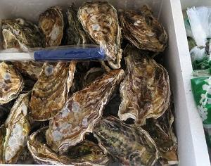 広島の牡蠣をいただく