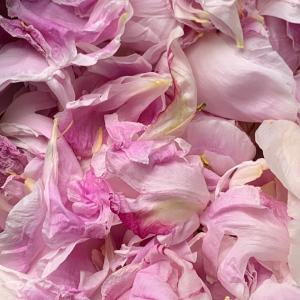 花びらに包まれて