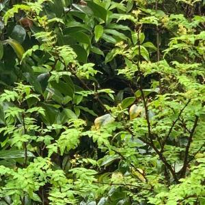 春のおごちそう❤️〜たけのこと木の芽のパスタ〜
