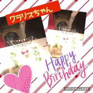 お誕生日わんこ🐶