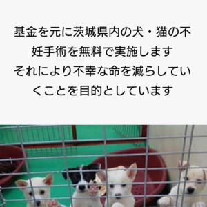 【拡散希望】犬猫無料不妊手術@茨城県小美玉市対象・10月6日(日)