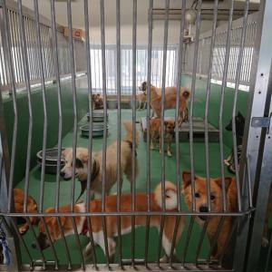 9/19 茨城センターから犬5頭+猫1頭の引取 ~今日もセンターは犬140頭ほど。