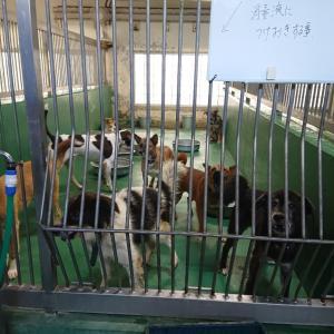 9/26 茨城センターへ、犬3頭+猫4頭の引取 ~今日は収容犬160頭いました。