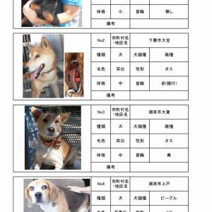 茨城センター 犬猫収容情報  9/26~10/7まで