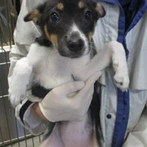 10/9(水)埼玉センターからMIX子犬の引取 &12日(土)の浅草エリール里親会中止です。