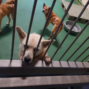 10/10 茨城センターへ 犬2頭+子猫2頭の引取 ~この日も160頭の犬で溢れる