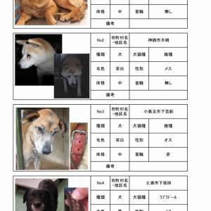 茨城センター 犬猫収容情報  10/8~10/21まで