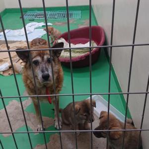 11/11 茨城センターへ 犬4頭の引取 ~センターの夜は冷えてきました。